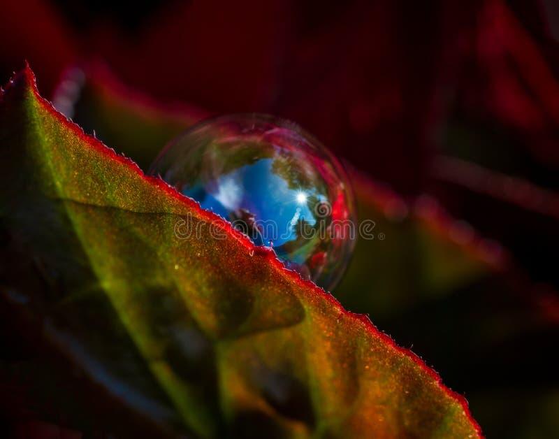 Soapbubble στο φύλλο μεταξύ των κόκκινων λουλουδιών στοκ εικόνα με δικαίωμα ελεύθερης χρήσης