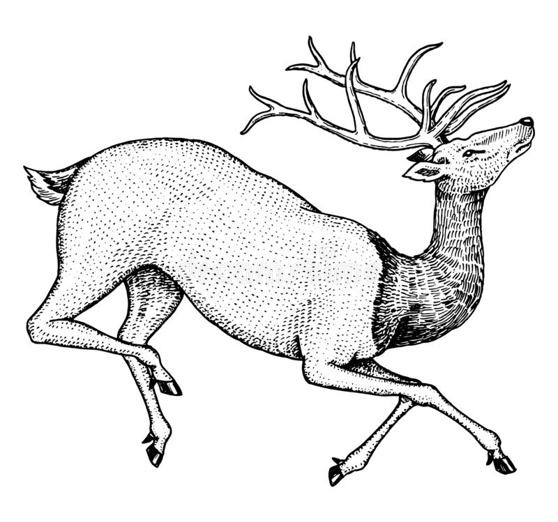 Soaring deer. Wild animal jumping. Horned mammal. Monochrome Vintage style. Engraved hand drawn sketch for tattoo or vector illustration