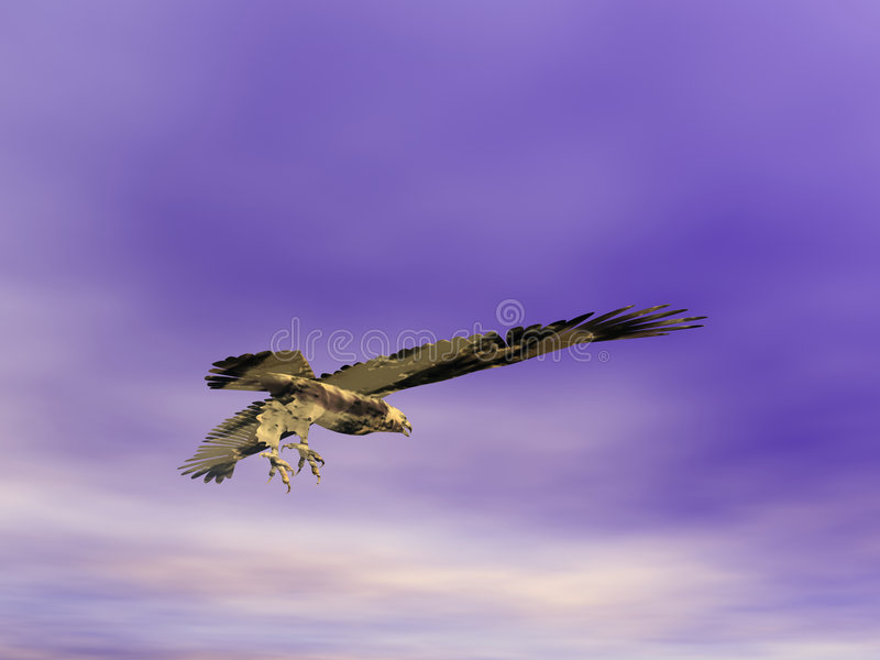Soaring Eagle royalty free stock photography