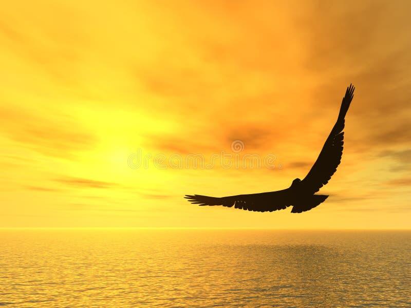 Soaring eagle royalty free stock photography