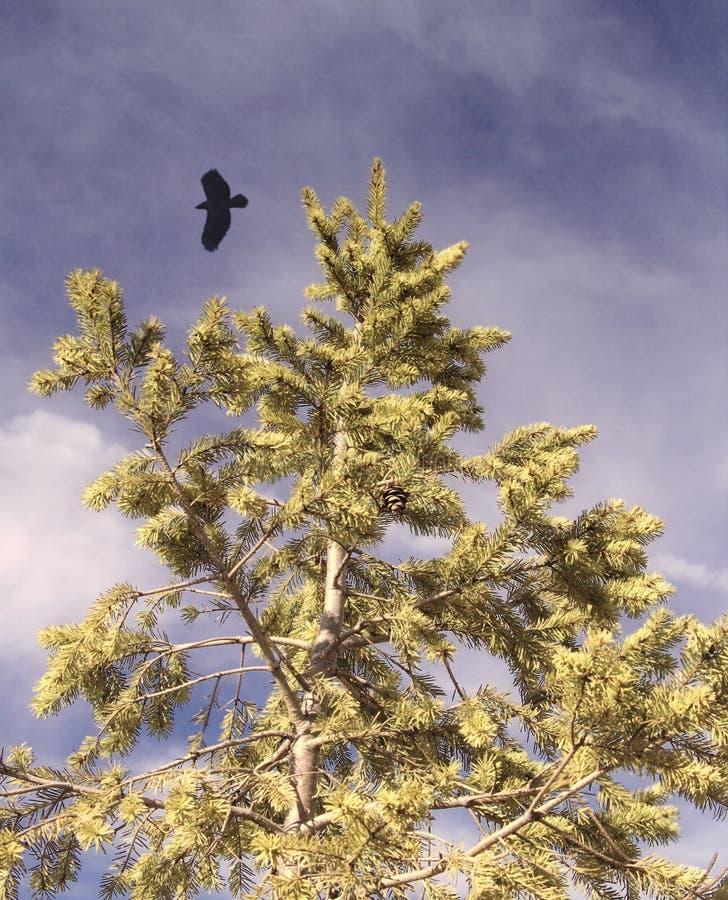Download Soaring Eagle over Tree stock photo. Image of soar, goals - 626756