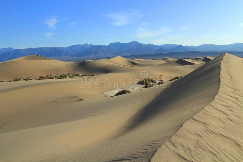 Soaring Mesquite Flats Sand Dunes in Morning Light, Death Valley National Park,美国加利福尼亚州 免版税库存照片