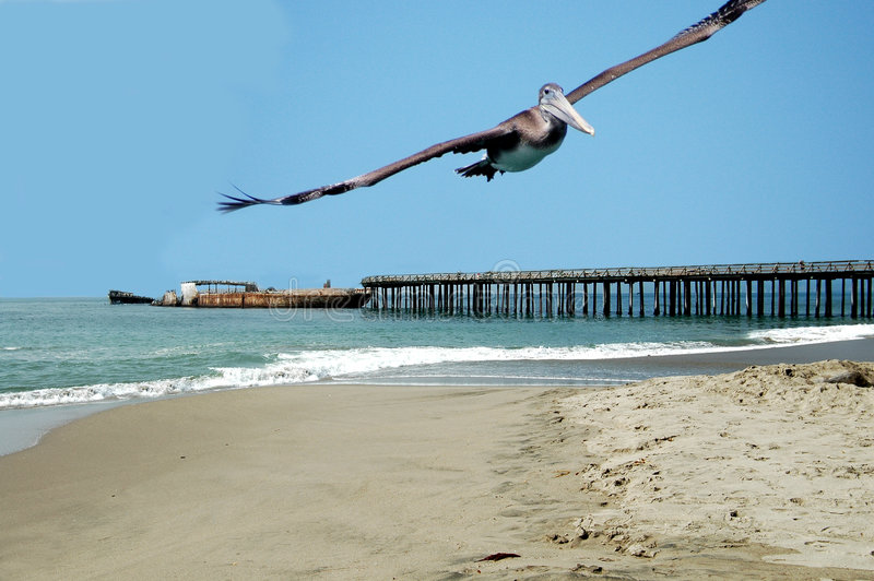 Download Soaring Pelican stock photo. Image of oceans, pier, water - 254486