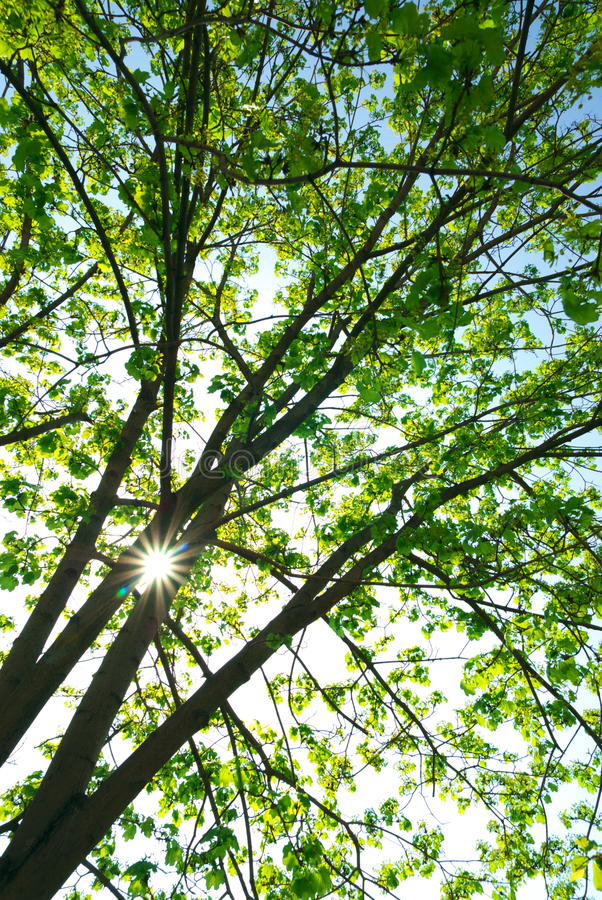 Sob a árvore grande fotografia de stock royalty free