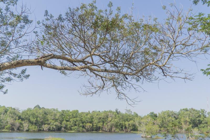 Sob a árvore grande e com ramo amplie fotografia de stock