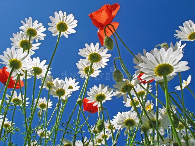 Sob as flores fotos de stock