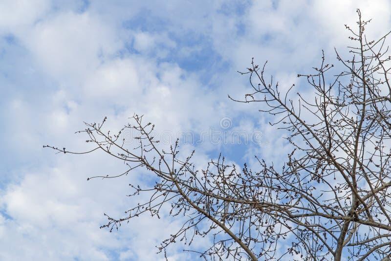 Sob da árvore e com ramo amplie fotos de stock
