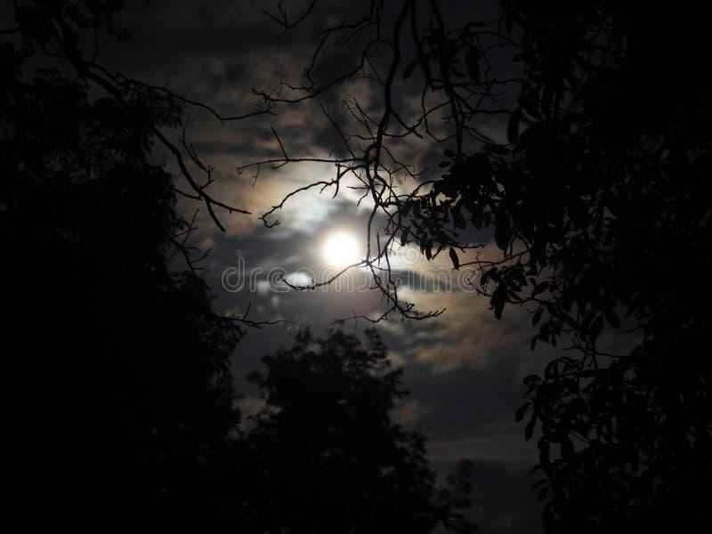 Sob a luz de lua imagens de stock