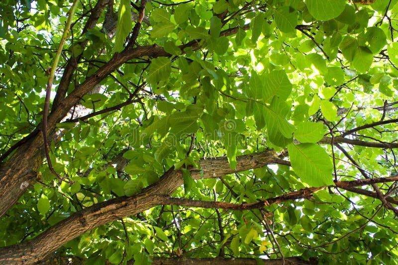 Sob uma árvore foto de stock royalty free