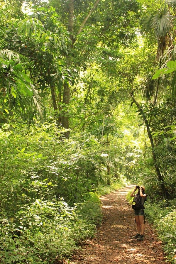 Soberania Nationaal Park, Panama - Augustus zesde van 2014: De vogelobservateurs zoeken voor het wild op dit regenwoudgebied dat  stock fotografie