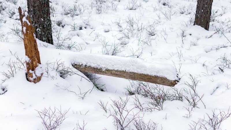 Sobras de um tronco de árvore caído coberto com a neve em uma floresta do inverno foto de stock