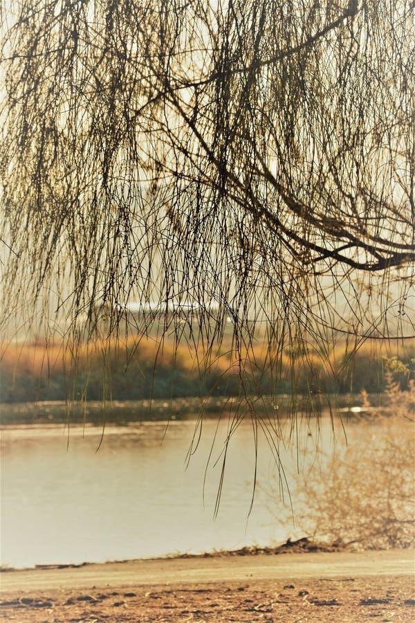 Sobre el lago desert fotos de archivo