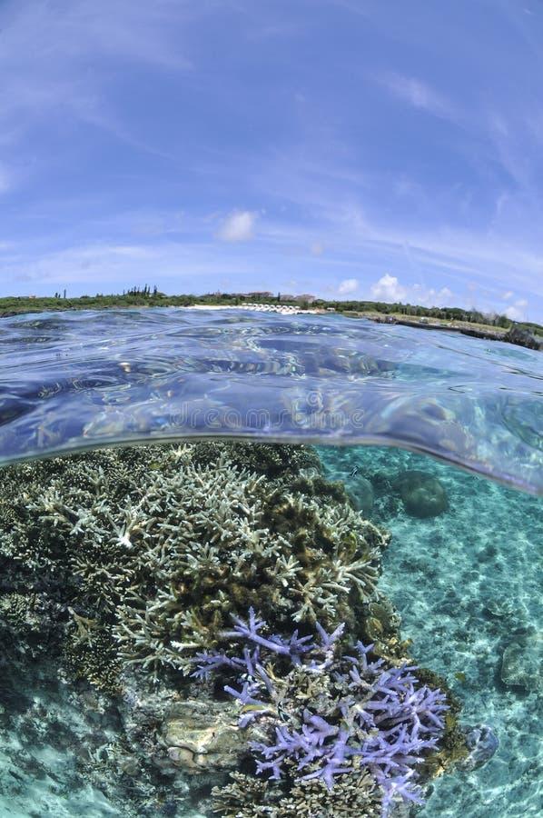 Sobre o tiro inferior de corais bonitos em Okinawa imagens de stock