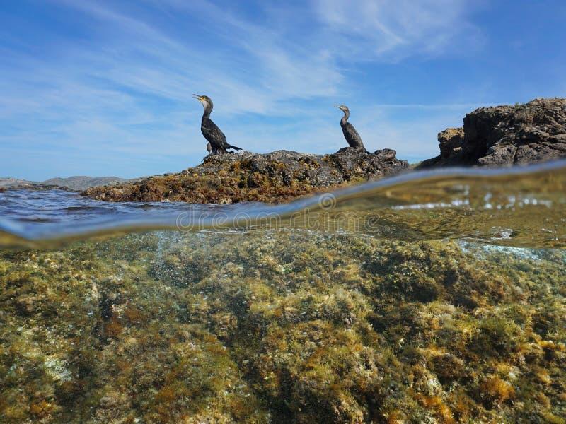 Sobre a rocha inferior dos pássaros dos cormorões do mar mediterrânea fotos de stock
