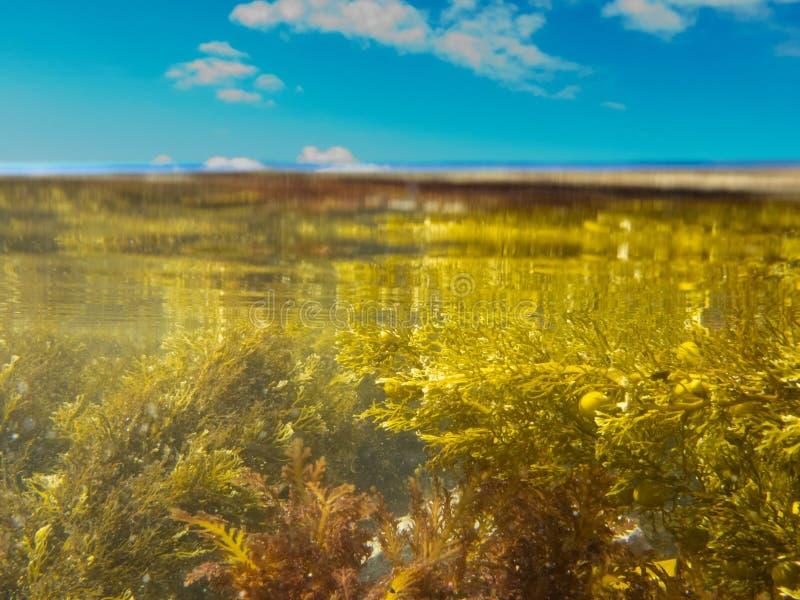 Sobre-sob o split disparado da água desobstruída na associação maré imagens de stock royalty free