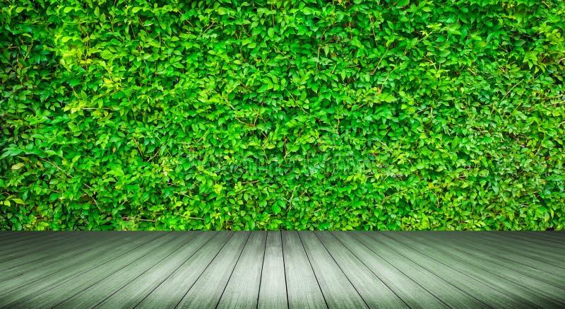 Sobremesa de madera rústica con empañado de la pared de la planta foto de archivo libre de regalías