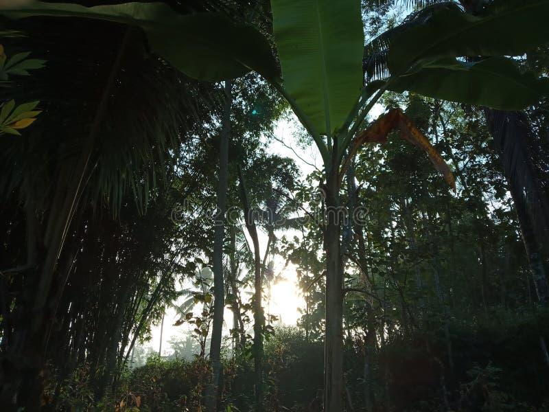 Sobreviva en bosque fotografía de archivo