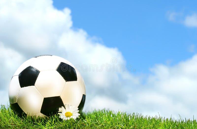 Soccer ball with daisy stock photography
