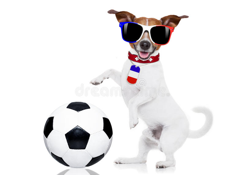 Soccer football dog with ball stock images