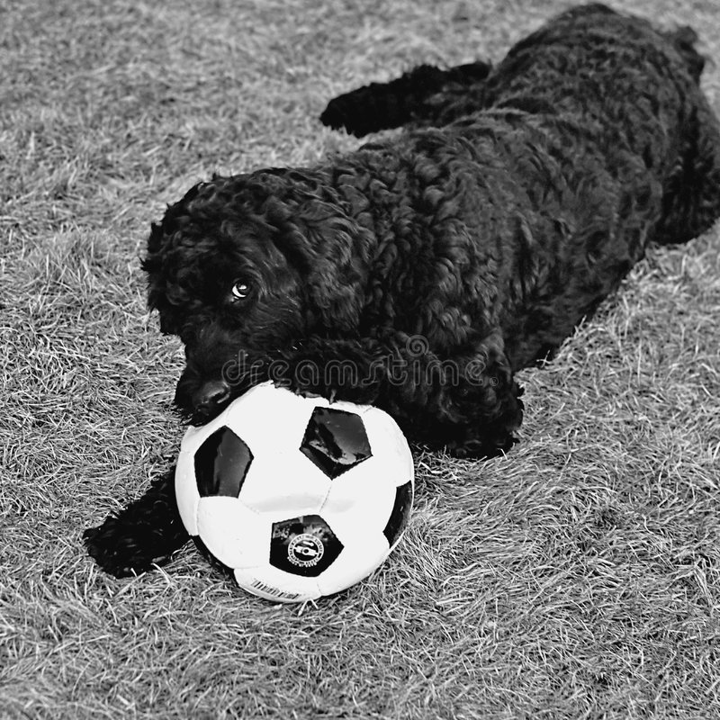 Download Soccer Hoodlum stock photo. Image of ball, black, funny - 4909026
