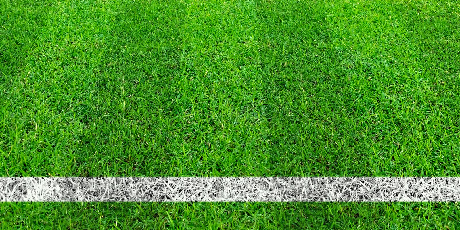 Soccer line in green grass of soccer field. Green lawn field pattern for sport background. Soccer line in green grass of soccer field. Green lawn field pattern vector illustration