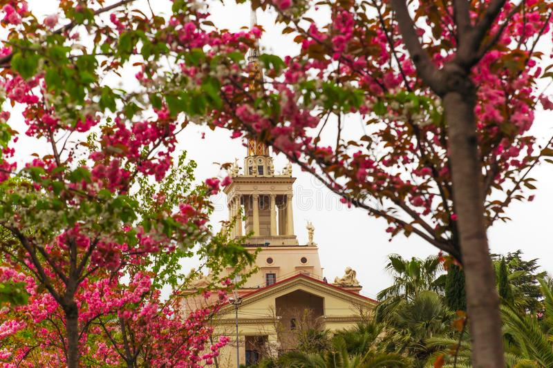 SOCHI,RUSSIA, 18 APRIL 2019 -view of the spire of the building of the sea port through the branches of flowering with pink flowers royalty free stock photos