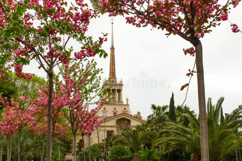 SOCHI,RUSSIA, 18 APRIL 2019 -view of the spire of the building of the sea port through the branches of flowering with pink flowers royalty free stock photo