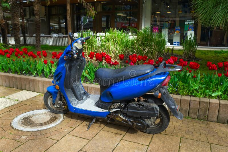 SOCHI,RUSSIA, 18 APRIL 2019 - vintage blue motor scooter parked in park against red tulips stock images