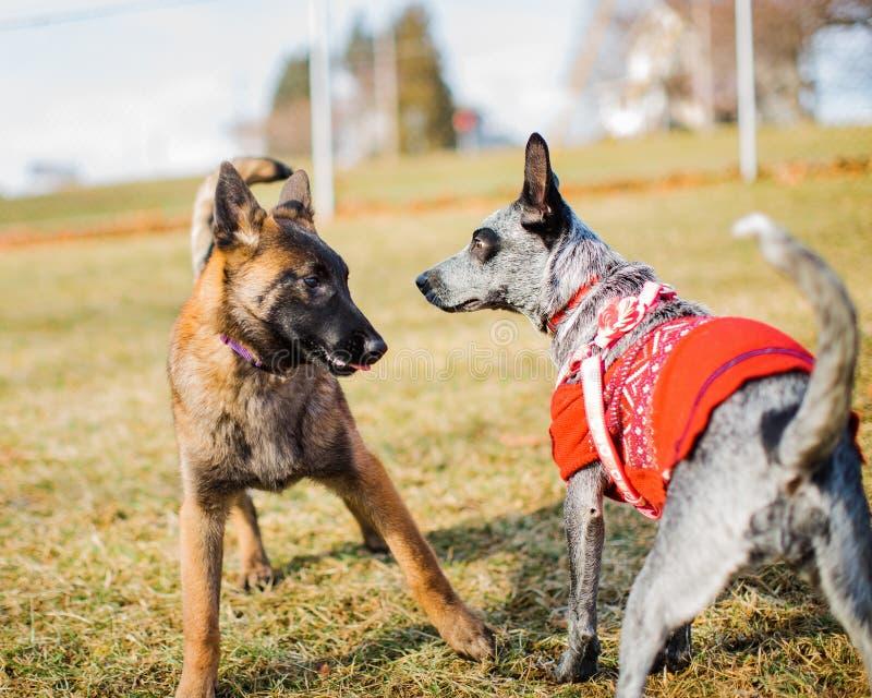 Socialización del perrito fotografía de archivo