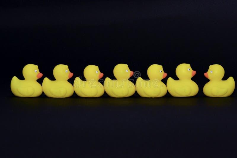 Sociedade do pato foto de stock royalty free