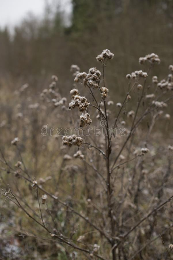 Socker på växterna royaltyfri fotografi
