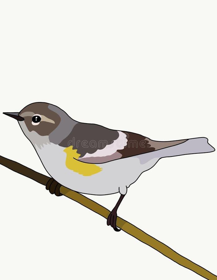 Sockerfågel vektor illustrationer