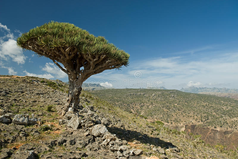 Socotra 343 stock photos
