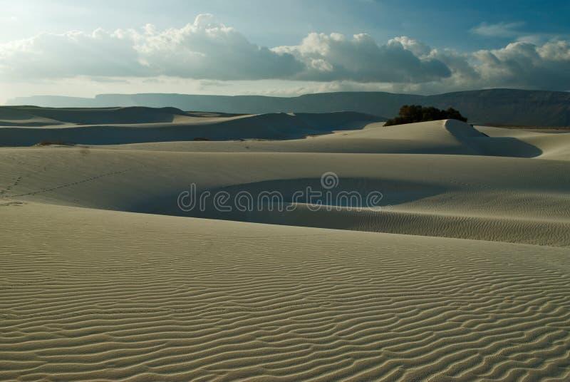 Socotra 365 imagens de stock