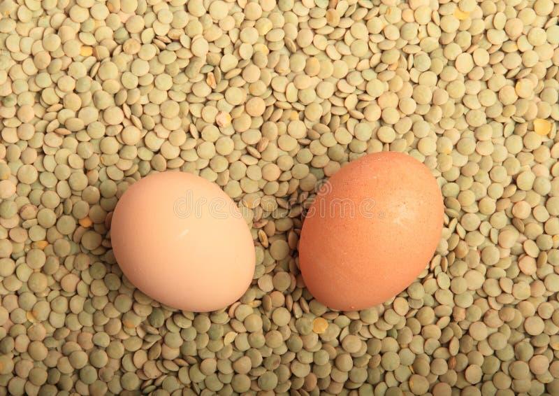 Soczewicy z jajkami zdjęcie royalty free