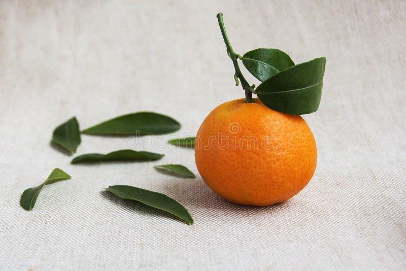 Soczyści Clementine i zieleni liście na tkaninie obrazy stock
