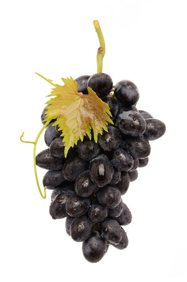 Soczyści winogrona obrazy stock