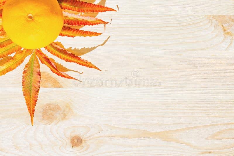 Soczysta żółta mandarynka i gałąź z pomarańczowymi liśćmi obraz stock