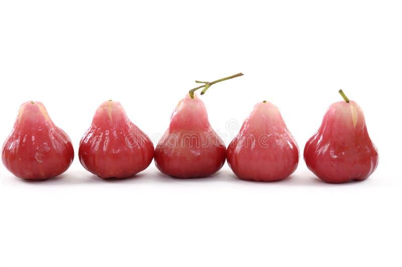 soczysta guava czerwień obrazy royalty free