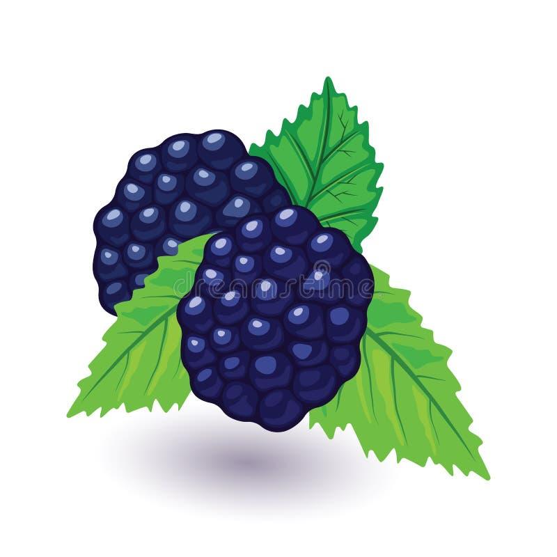 Soczysta i świeża czernica z zielonymi liśćmi Słodka czarna malinka ilustracja wektor