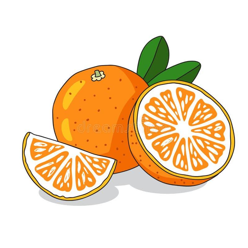 soczysta pomarańcza Pogodna lato owoc royalty ilustracja
