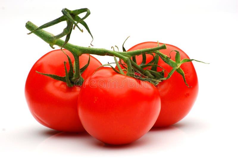 soczyste dojrzałe pomidory obrazy stock
