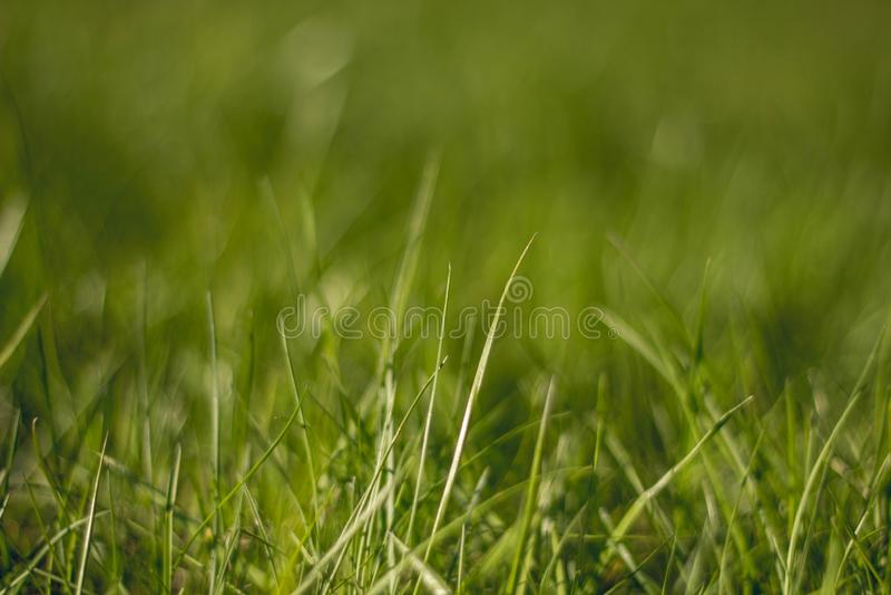 Soczysty i jaskrawy - zielona trawa z bliska Zielonej trawy t?o Tekstura trawa obrazy stock