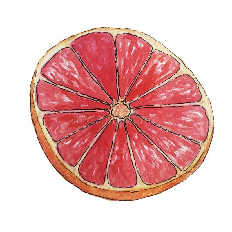Soczysty plasterek grapefruitowy odosobniony na białym tle ilustracji
