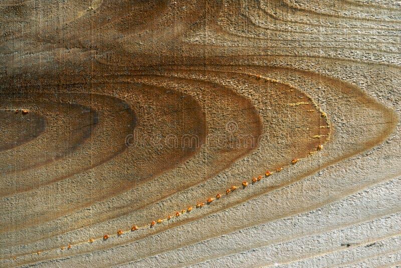 soczysty zbożowy drewna obraz royalty free