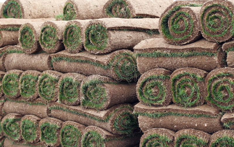 Sod. Close up of Rolled up sod stock images