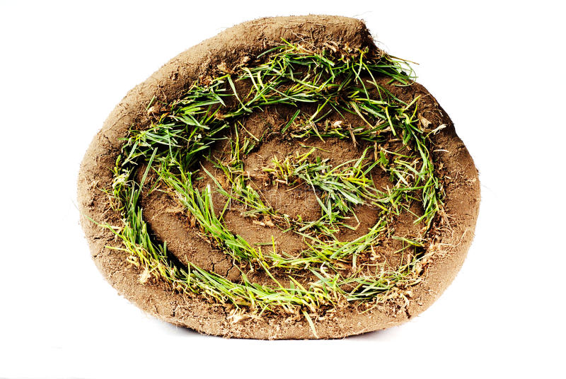 Sod. Lawn, sod, glass in roll royalty free stock image