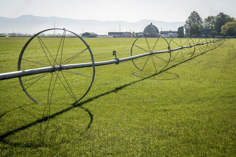Sod field and irrigation sprinkler. Morning low angle light on a sod farm in Idaho royalty free stock images