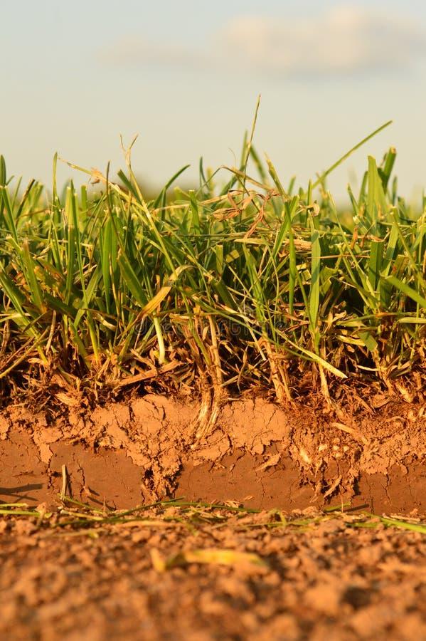 Sod grass background stock photos