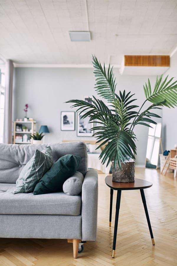 Sofá cinzento e planta verde no interior imagem de stock royalty free